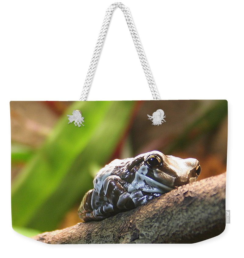 Amazon Milk Frog Weekender Tote Bag featuring the photograph Amazon Milk Frog by Laurel Talabere