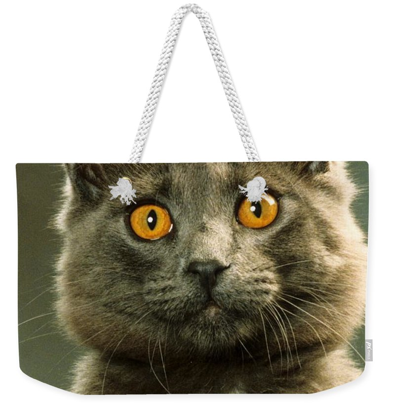 Domestic House Cat Weekender Tote Bag featuring the photograph Amber-eyed Domestic House Cat by Larry Allan