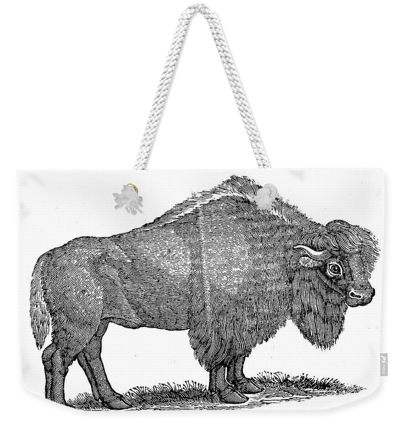 1840 Weekender Tote Bag featuring the photograph American Buffalo by Granger