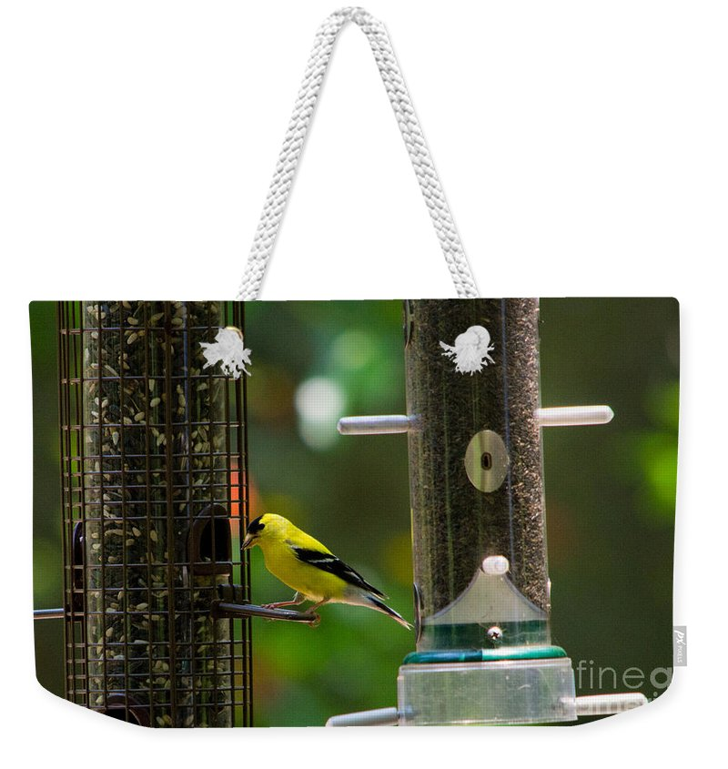 Scott Weekender Tote Bag featuring the photograph American Goldfinch by Scott Hervieux