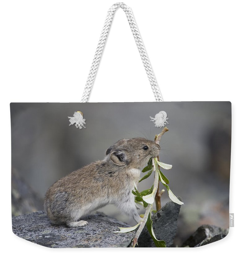 Mp Weekender Tote Bag featuring the photograph American Pika by Michael Quinton