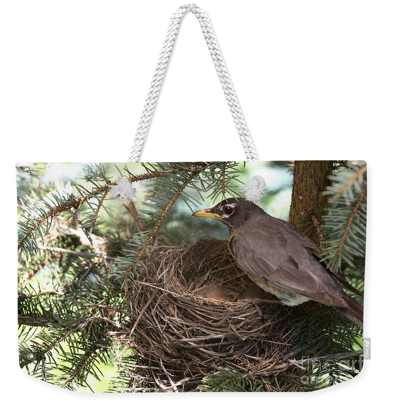 Robin Weekender Tote Bag featuring the photograph American Robin by Ted Kinsman