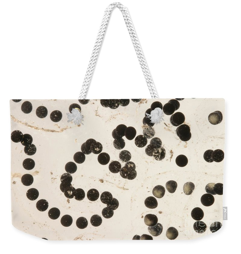 Animal Weekender Tote Bag featuring the photograph American Toad Eggs by Ted Kinsman