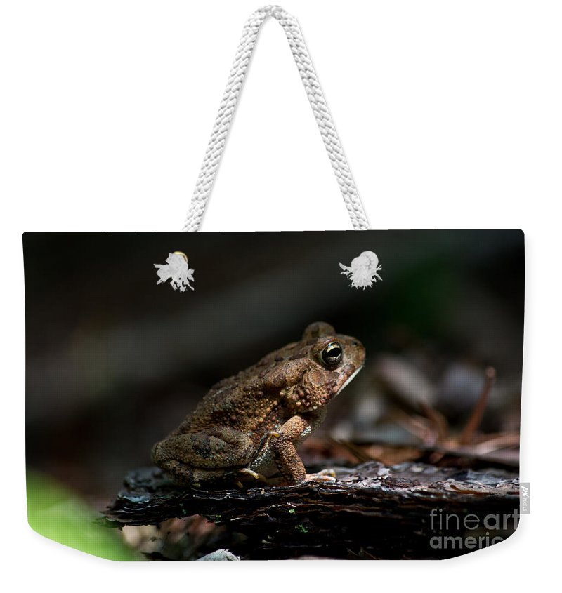 Scott Weekender Tote Bag featuring the photograph American Toad by Scott Hervieux