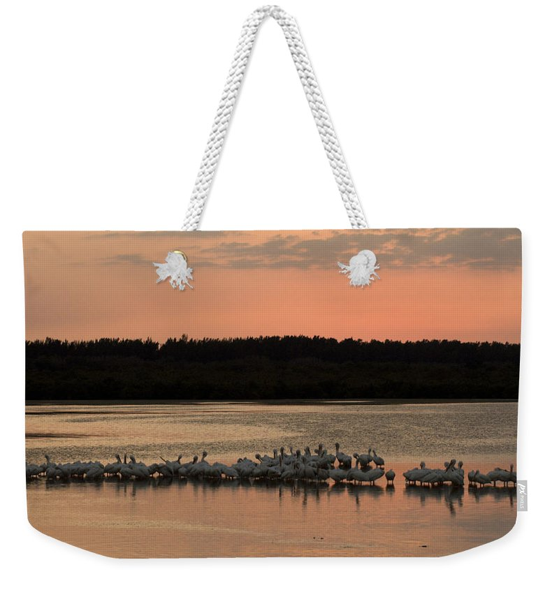 Photography Weekender Tote Bag featuring the photograph American White Pelicans At Sunset by Klaus Nigge