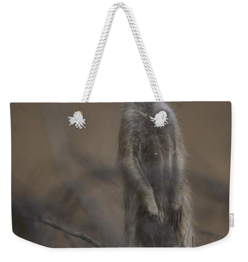 Africa Weekender Tote Bag featuring the photograph An Adult Meerkat Suricata Suricatta by Mattias Klum