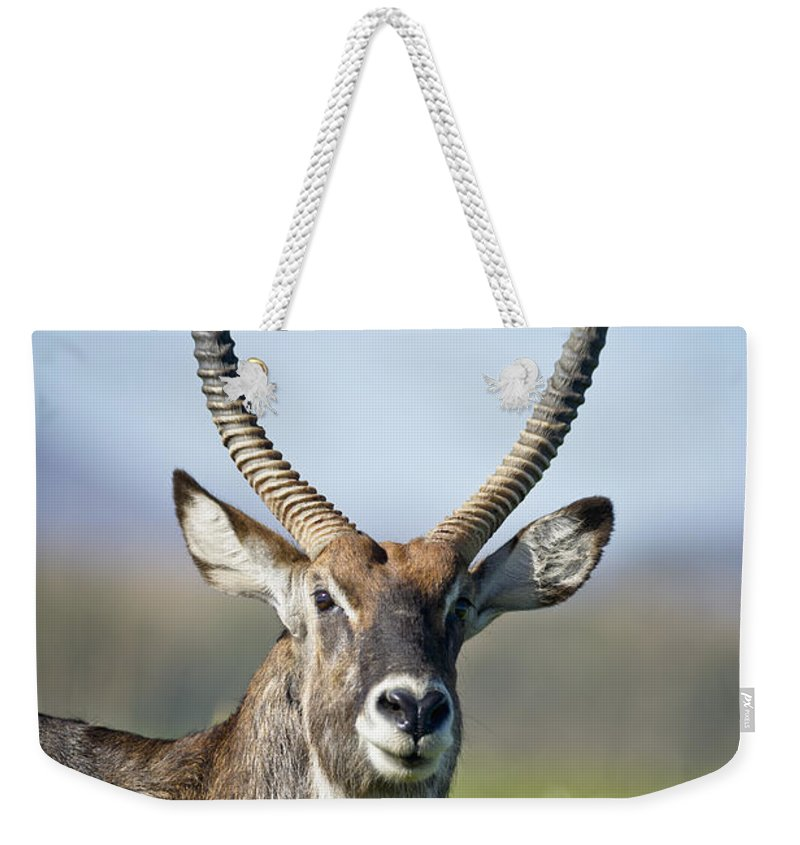 African Wildlife Weekender Tote Bag featuring the photograph An Antelope Standing Amongst Tall by David DuChemin