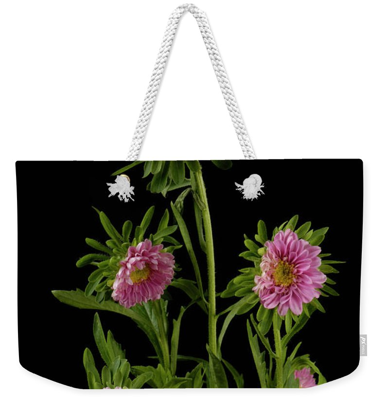 Photography Weekender Tote Bag featuring the photograph An Aster Flower Aster Ericoides by Joel Sartore