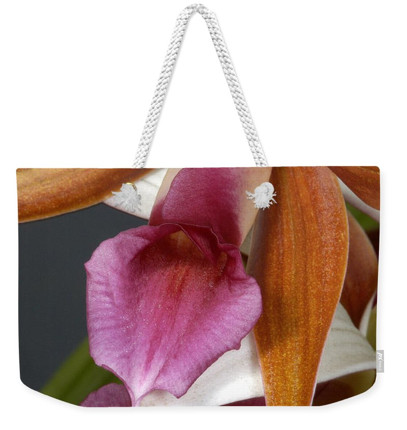 Orchid Weekender Tote Bag featuring the photograph An Orchid, Probably A Cattleya Hybrid by Stephen Sharnoff