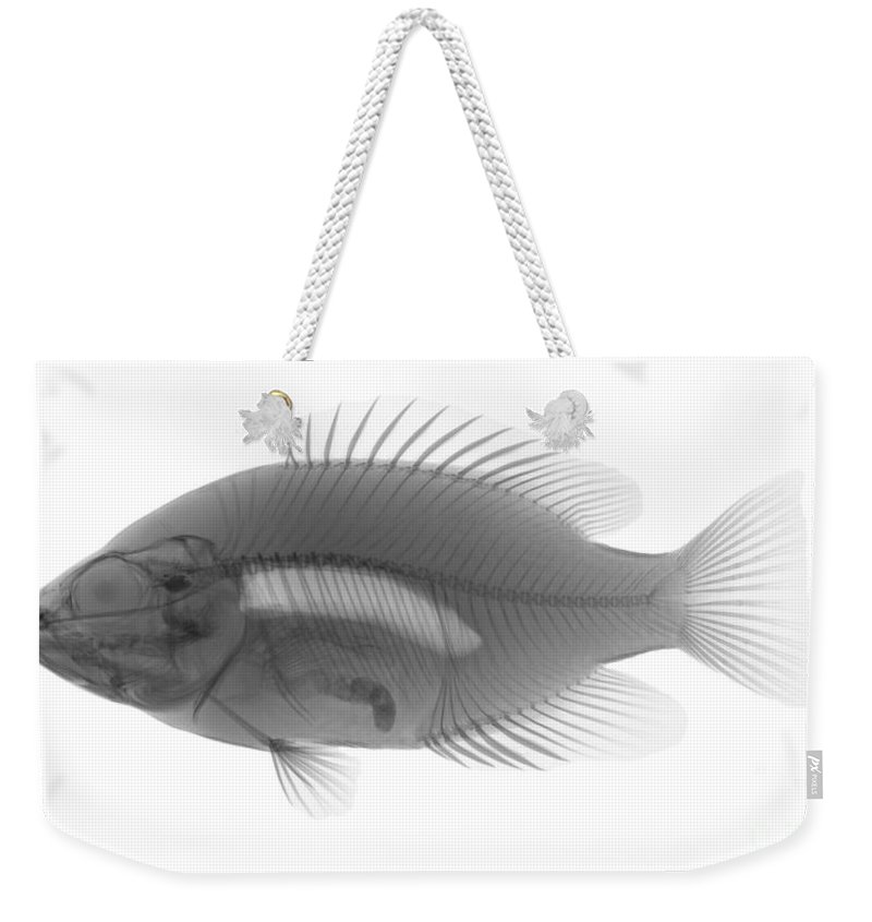 Xray Weekender Tote Bag featuring the photograph An X-ray Of A Rockbass by Ted Kinsman