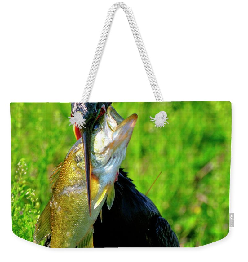 Anhinga Weekender Tote Bag featuring the photograph Anhinga And The Fish by Bill Dodsworth