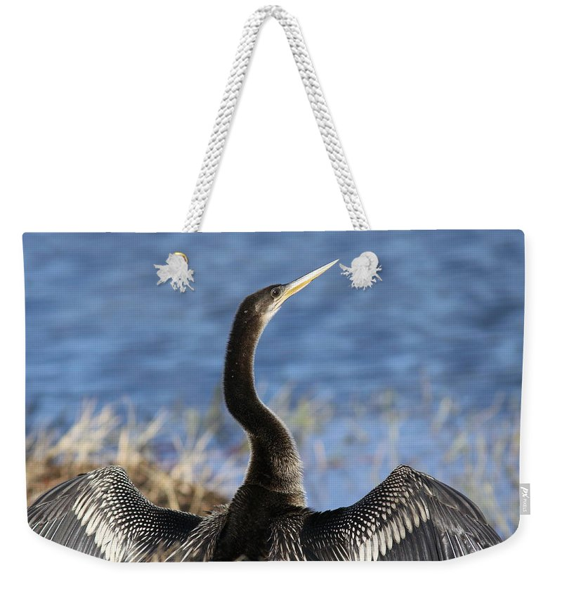 Anhinga Weekender Tote Bag featuring the photograph Anhinga - Drying Out by Travis Truelove