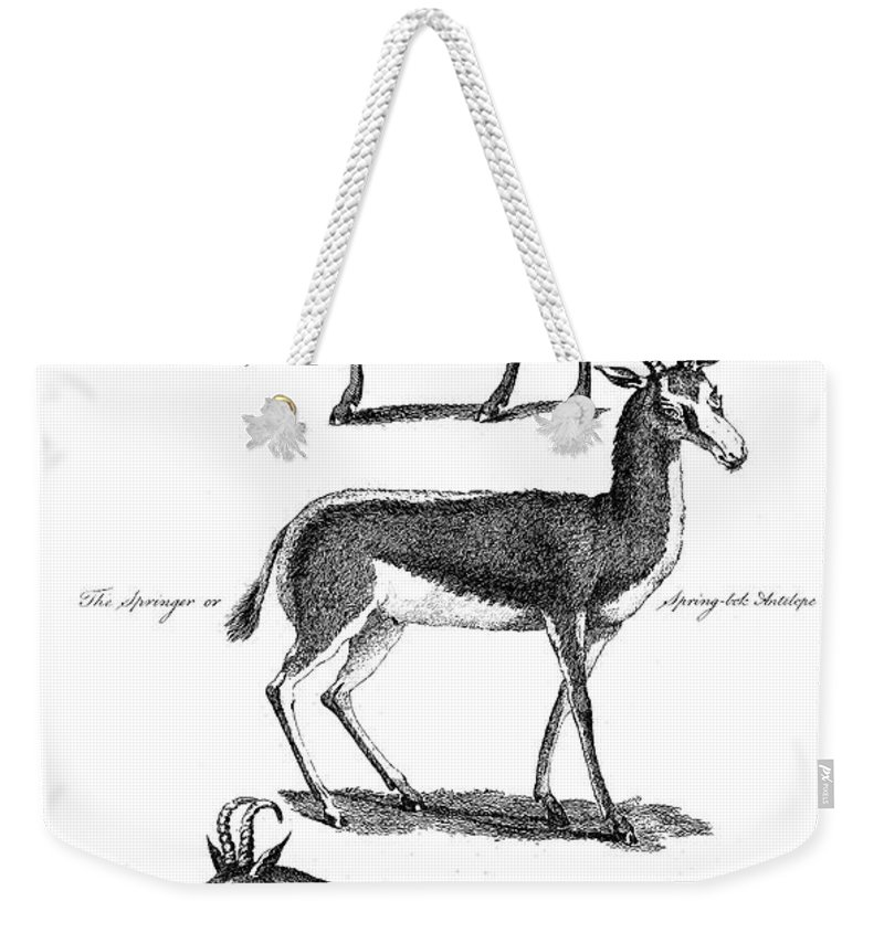 1791 Weekender Tote Bag featuring the photograph Antelopes by Granger