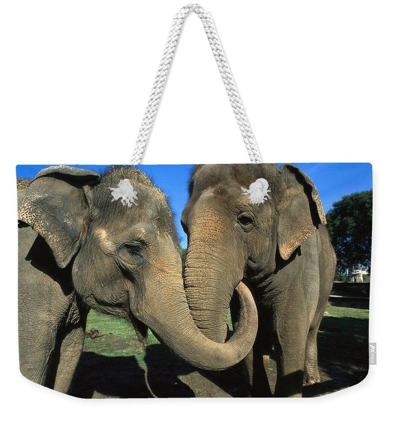 Mp Weekender Tote Bag featuring the photograph Asian Elephant Elephas Maximus Pair by Zssd