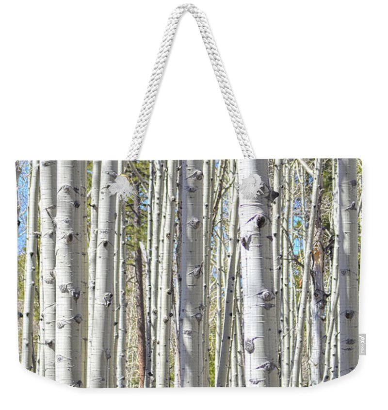 Fine Art Weekender Tote Bag featuring the photograph Aspen Grove by Donna Greene