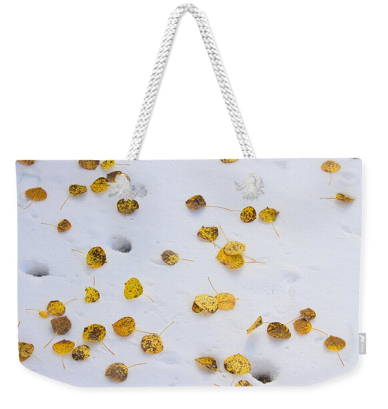 Snow Weekender Tote Bag featuring the photograph Aspen Leaves In The Snow by James BO Insogna