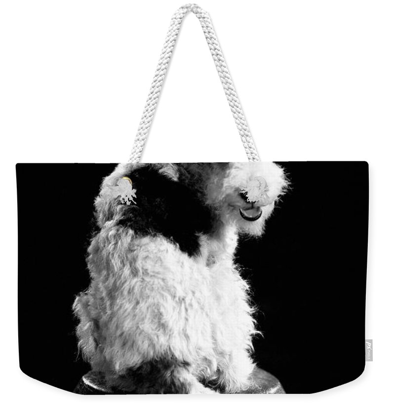 1930s Weekender Tote Bag featuring the photograph Asta by Granger
