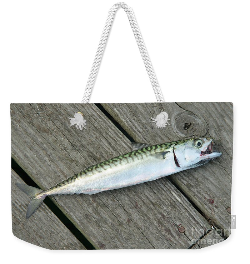 Animal Weekender Tote Bag featuring the photograph Atlantic Mackerel Scomber Scombrus by Ted Kinsman