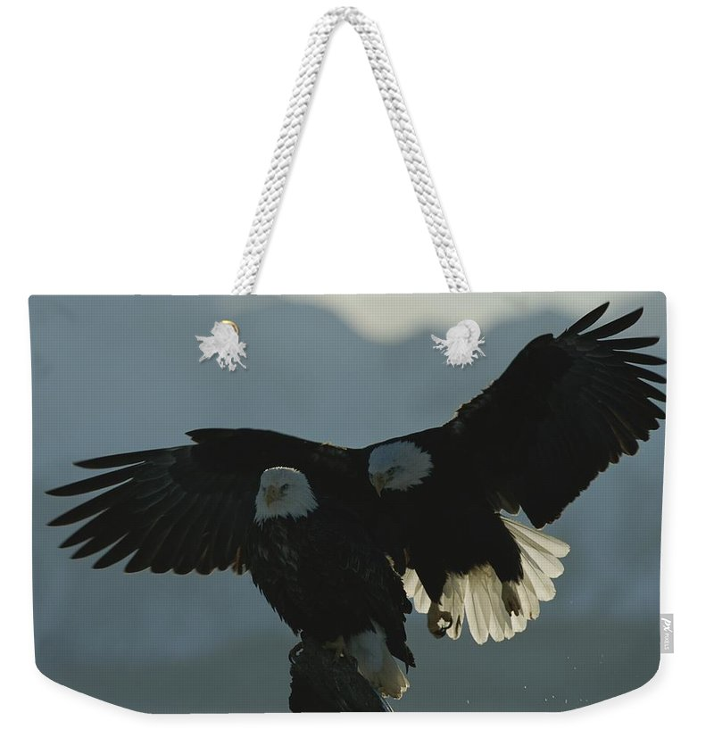 North America Weekender Tote Bag featuring the photograph Attempting To Take Over A Northern by Norbert Rosing