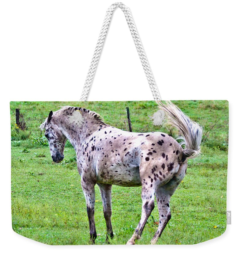 Leopard Weekender Tote Bag featuring the photograph Attitude by Betsy Knapp