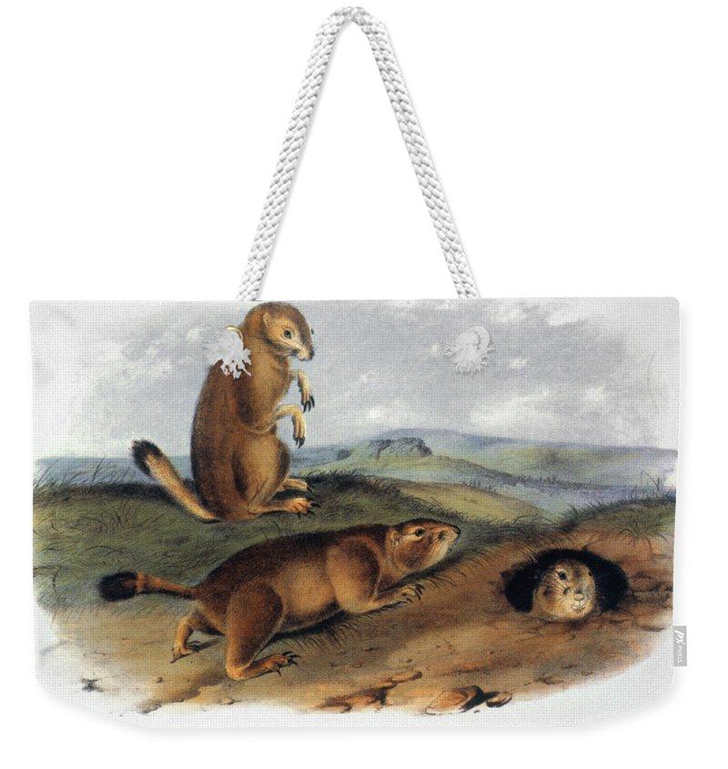 1844 Weekender Tote Bag featuring the photograph Audubon: Prairie Dog, 1844 by Granger