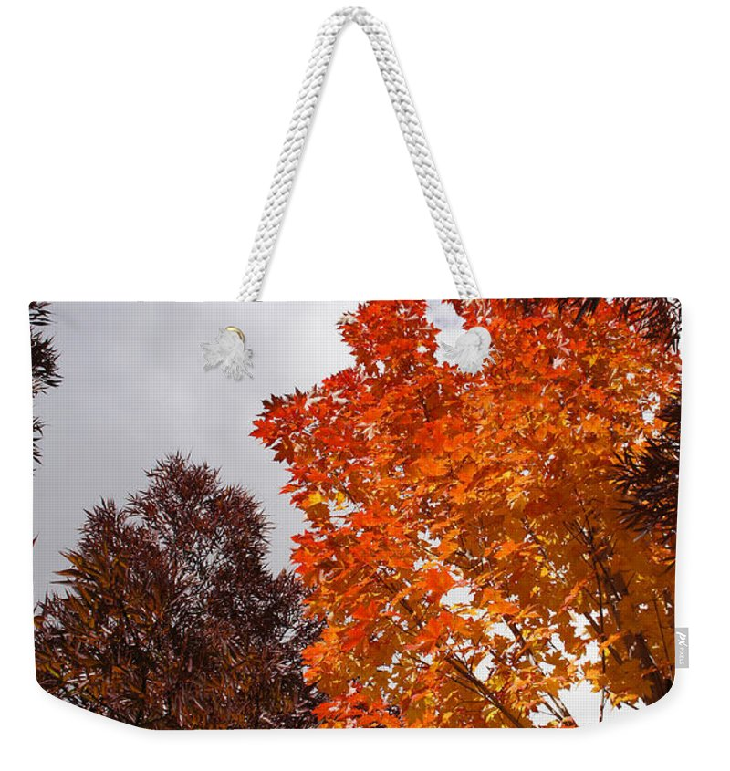 Autumn Weekender Tote Bag featuring the photograph Autumn Looking Up by Mick Anderson