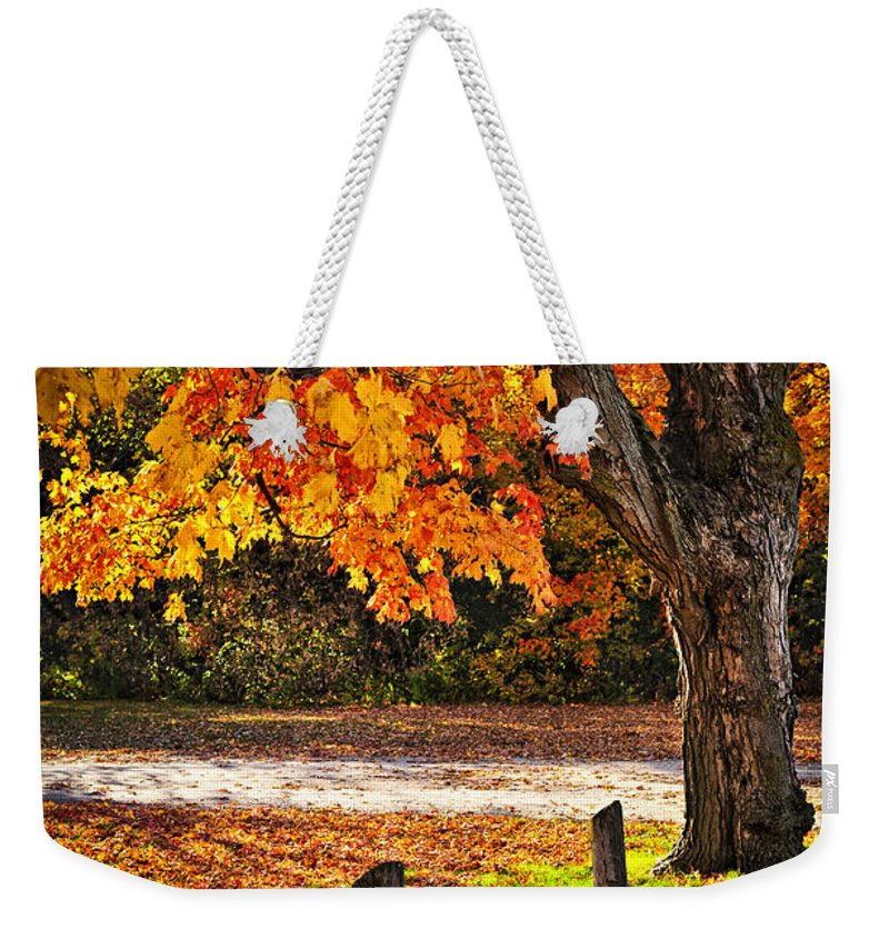 Maple Weekender Tote Bag featuring the photograph Autumn Maple Tree Near Road by Elena Elisseeva