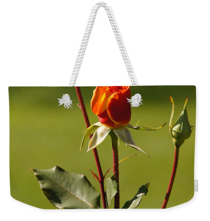 Rose Weekender Tote Bag featuring the photograph Autumn Rose by Mick Anderson