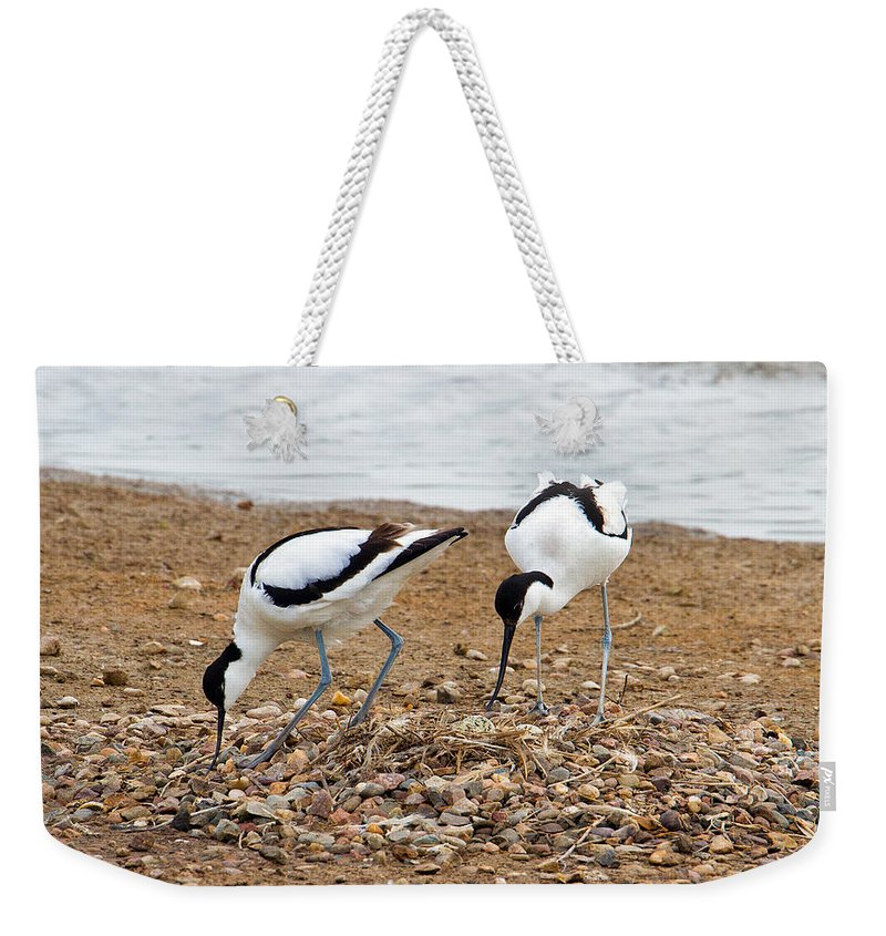 Birds Weekender Tote Bag featuring the photograph Avocets At Nest by Bob Kemp