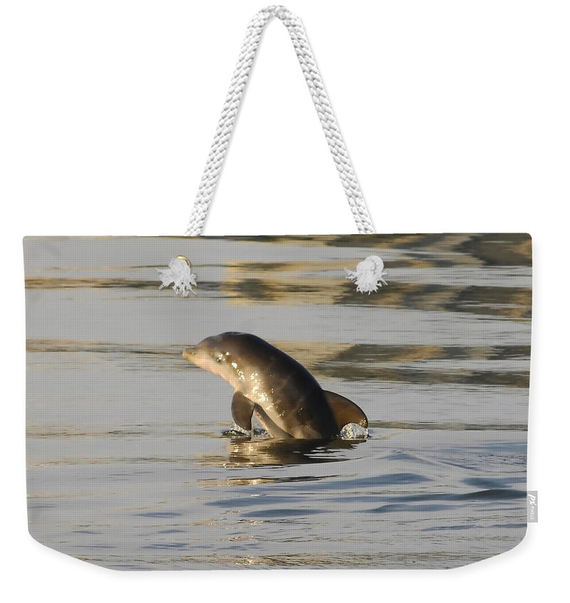 Wildlife Photography Weekender Tote Bag featuring the photograph Baby Dolphin by David Lee Thompson