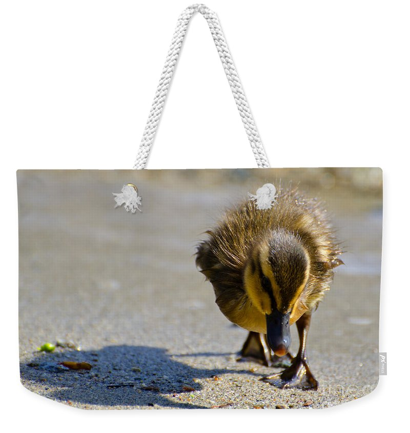 Duck Weekender Tote Bag featuring the photograph Baby Duck by Mats Silvan