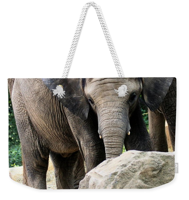 African Elephant Weekender Tote Bag featuring the photograph Baby Elephant by Angela Rath