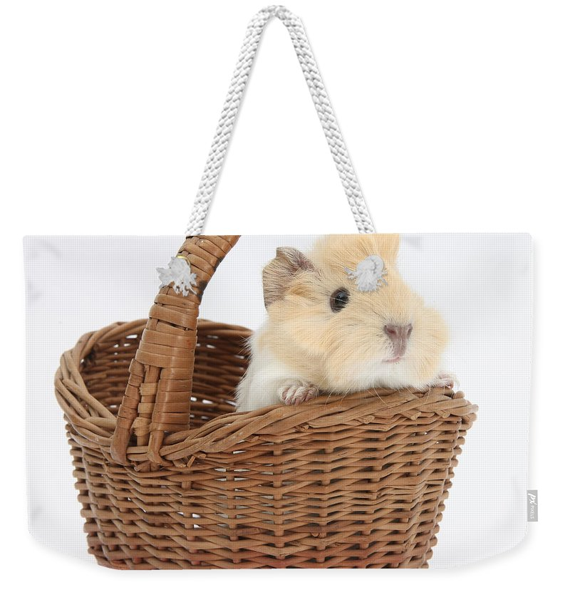 Nature Weekender Tote Bag featuring the photograph Baby Guinea Pig In A Wicker Basket by Mark Taylor