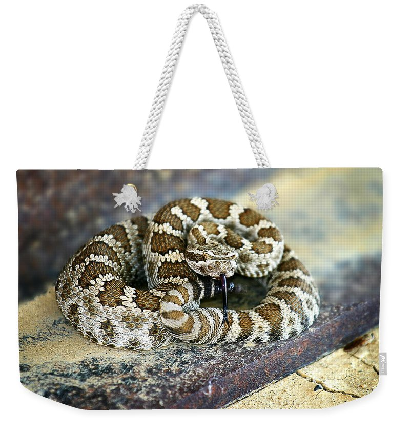 Rattle Snake Weekender Tote Bag featuring the photograph Baby Rattle by Anthony Jones
