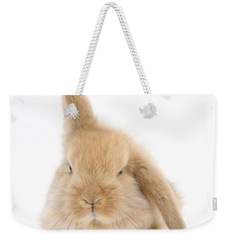 Animal Weekender Tote Bag featuring the photograph Baby Sandy Lop Rabbit by Mark Taylor