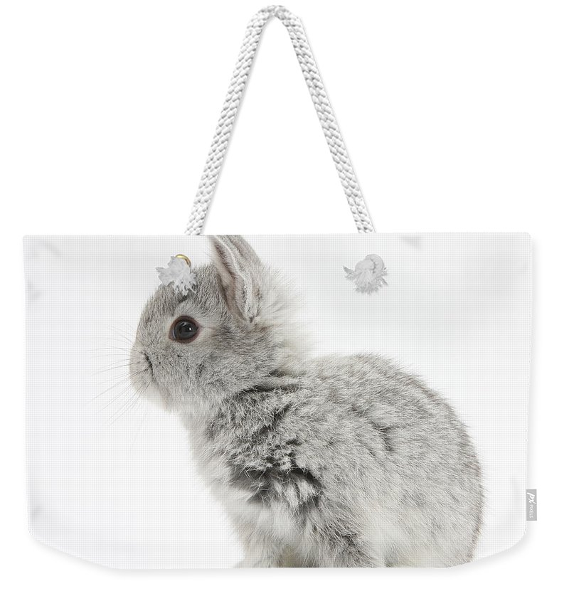 Nature Weekender Tote Bag featuring the photograph Baby Silver Rabbit by Mark Taylor