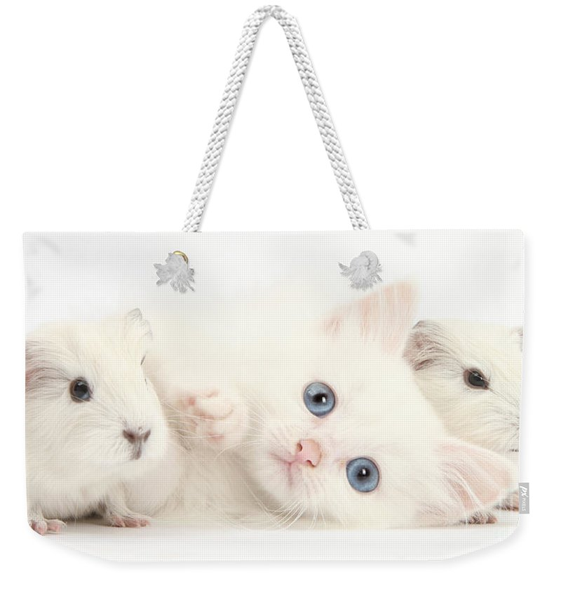 Nature Weekender Tote Bag featuring the photograph Baby White Guinea Pigs And White Maine by Mark Taylor