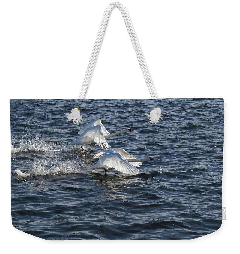 White Swans Weekender Tote Bag featuring the photograph Backlit Swans by Steve Purnell