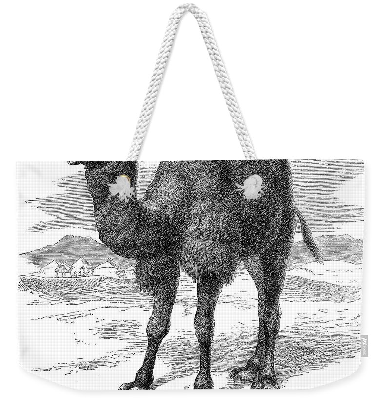 19th Century Weekender Tote Bag featuring the photograph Bactrian Camel by Granger