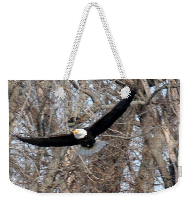 Bald Eagle Weekender Tote Bag featuring the photograph Bald Eagle At Full Wingspan by Crystal Heitzman Renskers
