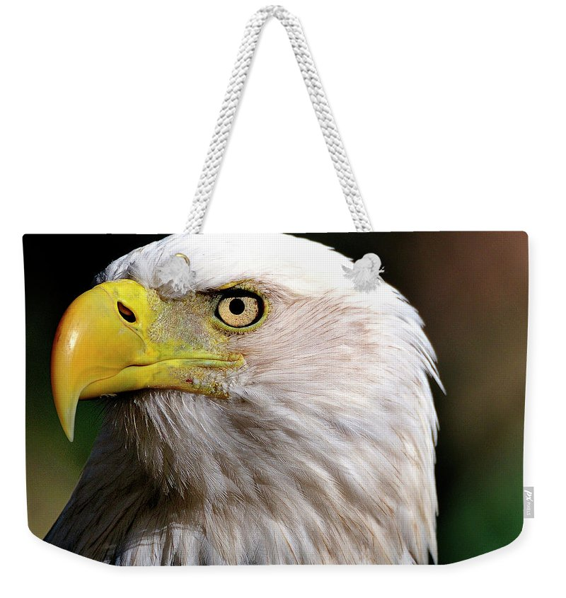 Bald Weekender Tote Bag featuring the photograph Bald Eagle Close Up by Bill Dodsworth