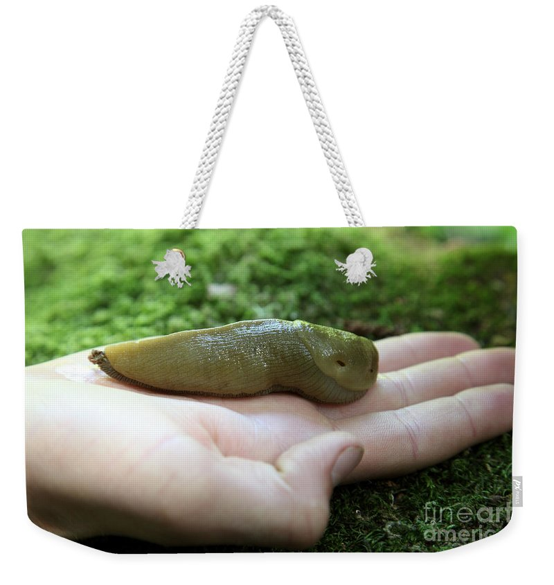 Nature Weekender Tote Bag featuring the photograph Banana Slug On Hand by Ted Kinsman