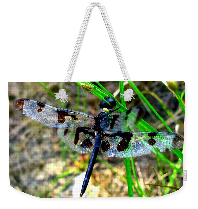 Insect Weekender Tote Bag featuring the photograph Banded Pennant Dragonfly by Donna Brown