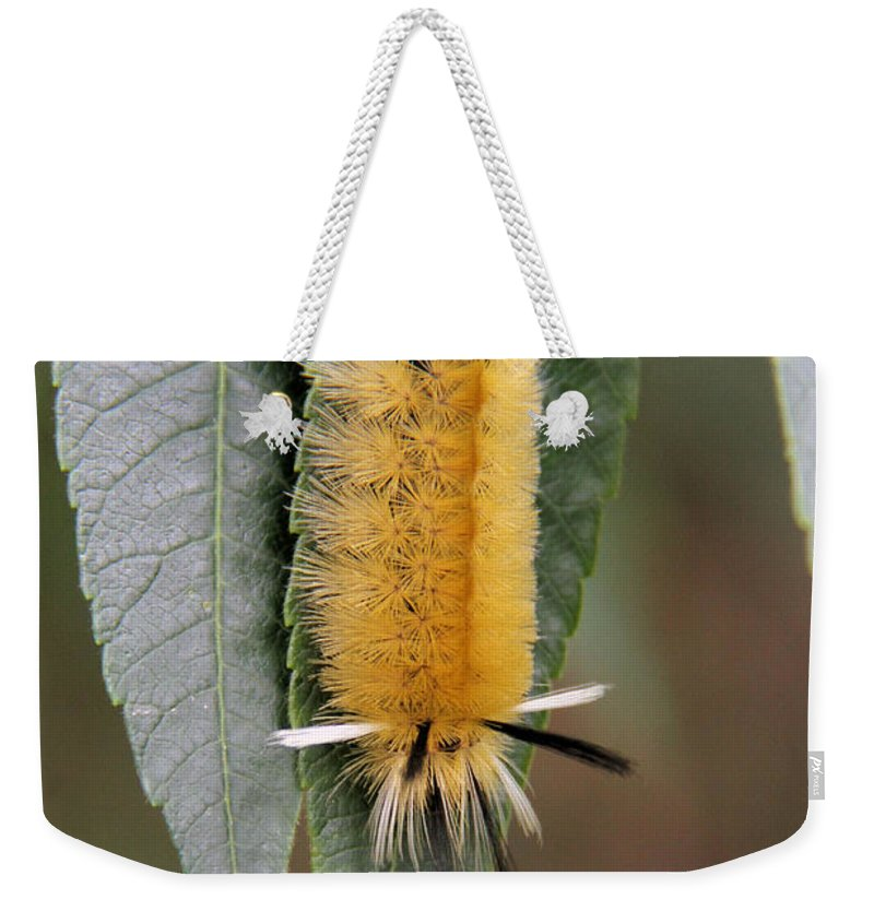 Banded Tussock Moth Caterpillar Weekender Tote Bag featuring the photograph Banded Tussock Moth Caterpillar by Doris Potter
