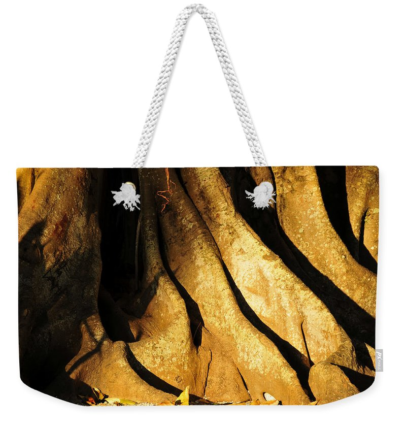 Fine Art Photography Weekender Tote Bag featuring the photograph Banyonland by David Lee Thompson