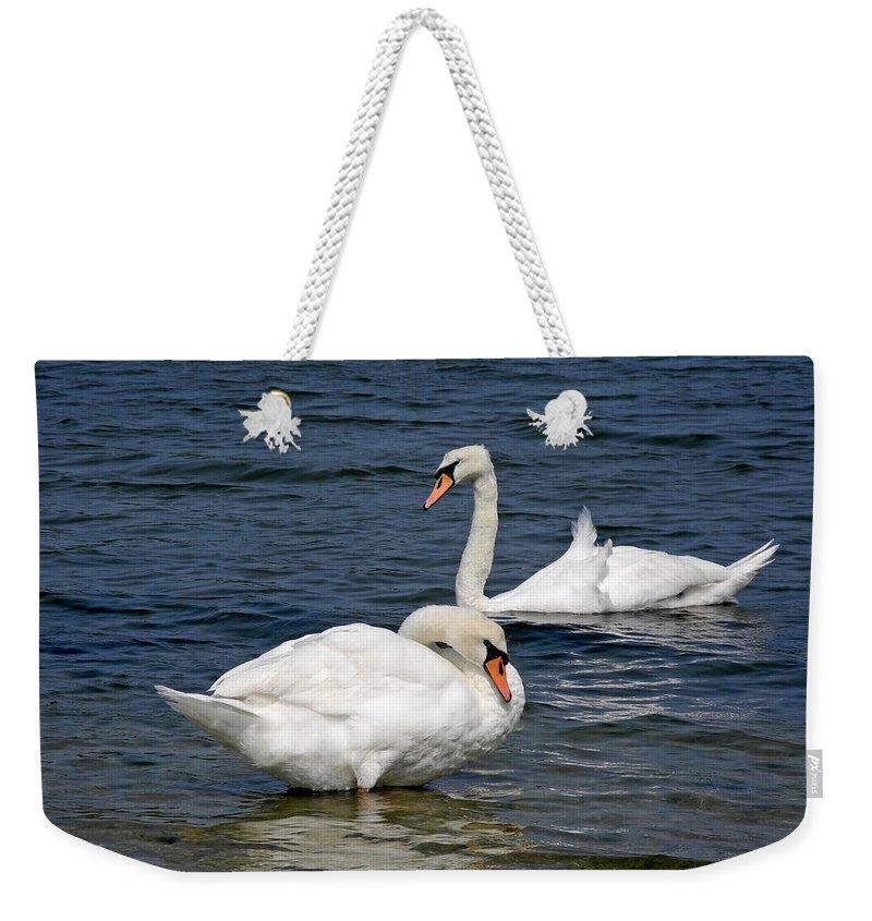 Swan Weekender Tote Bag featuring the photograph Bathing Beauties by Lynda Lehmann