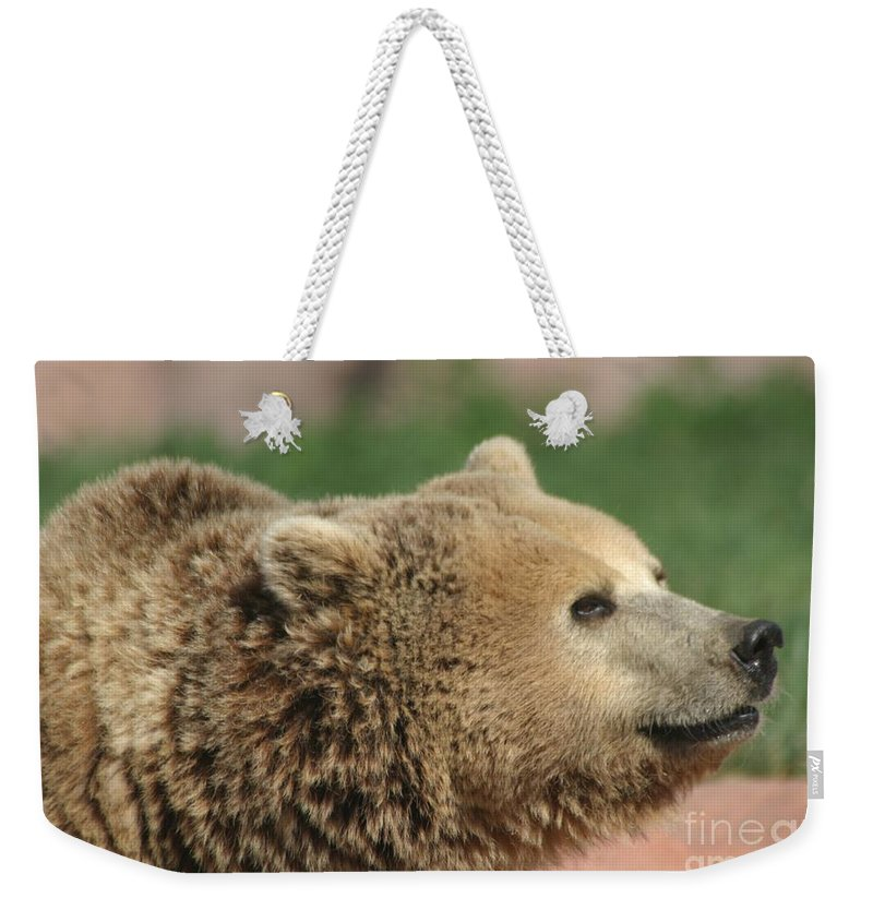Bear Weekender Tote Bag featuring the photograph Bear Profile by Living Color Photography Lorraine Lynch