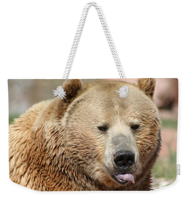 Bear Weekender Tote Bag featuring the photograph Bear Rasberry by Living Color Photography Lorraine Lynch