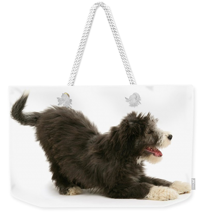 Animal Weekender Tote Bag featuring the photograph Bearded Collie Pup by Mark Taylor