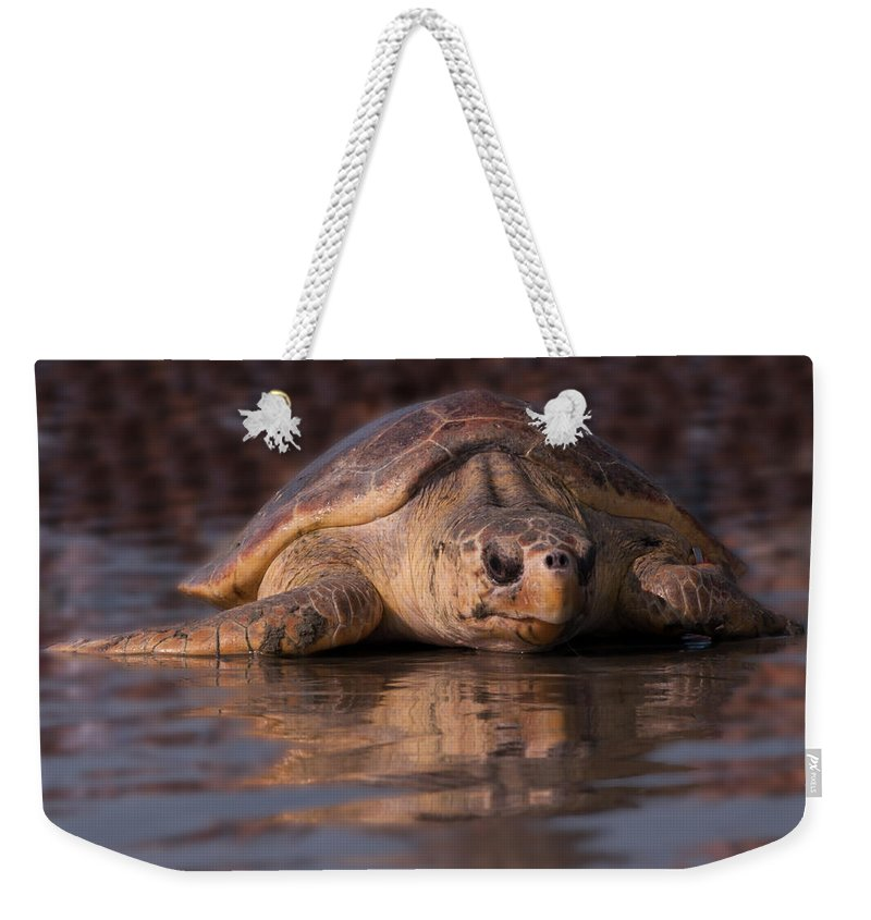 Sea Turtle Weekender Tote Bag featuring the photograph Beaufort The Turtle by Susan Cliett